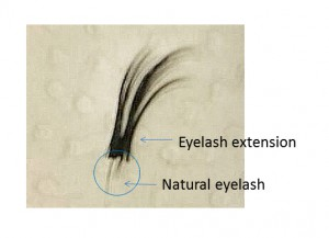 More than 12 extension were applied on only 3 natural lashes. Natural lashes dropped because it is too heavy.